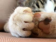 Tabby cat kitten paws with claws extended royalty free stock photos