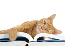Tabby cat laying on book paw over edge,  isolated on white background Royalty Free Stock Photography
