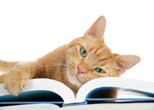 Tabby cat laying on book paw over edge,  isolated on white background Royalty Free Stock Photos