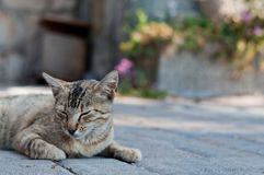 Tabby cat laying on the ground Royalty Free Stock Photo