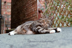 Tabby cat. Laying on shed roof Stock Images