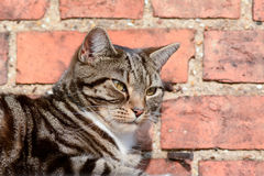 Tabby cat laying on shed roof Royalty Free Stock Photo
