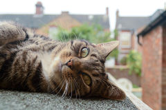 Tabby cat laying on side. Tabby cat laying in sun on shed roof Royalty Free Stock Photos