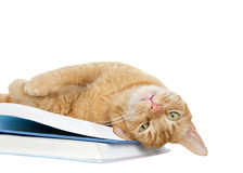 Tabby cat laying upside down on books looking at viewer Stock Images