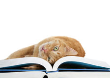 Tabby cat laying upside down on books looking at viewer Stock Photo