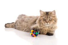 Tabby cat lies on white background Royalty Free Stock Image