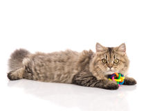 Tabby cat lies on white background Royalty Free Stock Photos