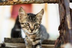 Tabby Cat linda en la plataforma de madera vieja Imágenes de archivo libres de regalías