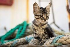 Tabby Cat linda en la plataforma de madera vieja y cuerdas gastadas de la marina de guerra Imagenes de archivo