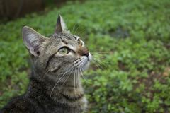 Tabby cat looking curious. stock photo