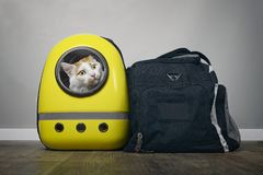 Tabby cat looking curious out of a backpack carrier next to a travelling bag. Horizontal image royalty free stock photo