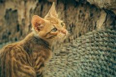 Tabby Cat looks into camera Stock Image
