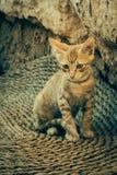 Tabby Cat looks into camera Stock Photos