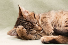 Tabby cat lying on bed Stock Image