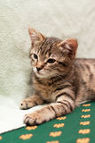 Tabby cat lying on bed Royalty Free Stock Photography
