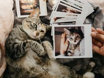 Tabby cat lying down in bed and several retro photos. Tabby cat lying down comfortably in bed and several retro photos royalty free stock photo