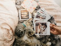 Tabby cat lying down comfortably in bed and several retro photos. Tabby cat lying down in bed and several retro photos stock photo