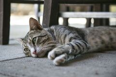 Tabby Cat Lying on Ground Stock Images