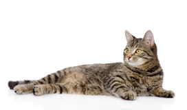 Tabby cat lying and looking away. isolated on white background Stock Photos