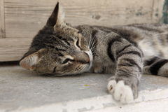 Tabby cat lying Royalty Free Stock Photo