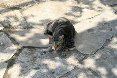 Tabby cat lying on a paved ground stock photos