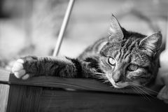 Tabby Cat Lying In Planter Stock Photo