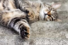 Tabby cat lying on a slate roof and resting. With paw in focus in the foreground and muzzle in defocus stock photography
