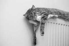 Tabby cat lying on top of a radiator Stock Photo