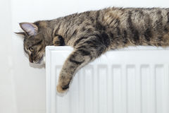 Tabby cat lying on top of a radiator Royalty Free Stock Photos