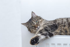 Tabby cat lying on top of a radiator Stock Image
