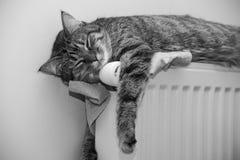 Tabby cat lying on top of a radiator Stock Photos