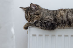 Tabby cat lying on top of a radiator Royalty Free Stock Image