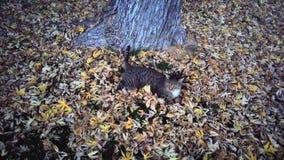 Tabby Cat Lying Under ett träd Royaltyfria Foton