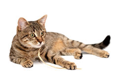 Tabby cat lying on white Stock Images