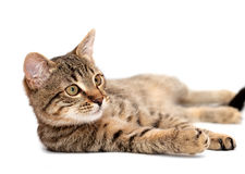 Tabby cat lying on white Royalty Free Stock Image