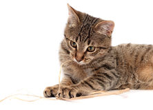 Tabby cat lying on white Stock Photos