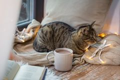 Tabby cat lying on window sill with book at home. Pets, christmas and hygge concept - tabby cat lying on window sill with book and garland lights at home Stock Image