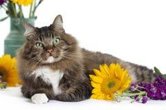 Tabby Cat med solrosor 2 Arkivfoto