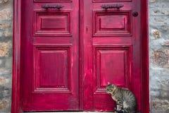 Tabby Cat mignonne s'assied près de la porte en bois rouge de Chambre photo stock