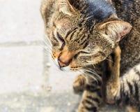 Tabby Cat mit den gelben Augen, die auf Gehweg sitzen Stockbilder