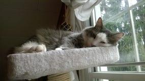 Tabby Cat Naptime Fotografering för Bildbyråer