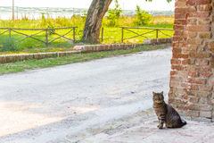Tabby cat near brick wall Royalty Free Stock Image
