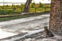 tabby cat near brick wall Stock Photography