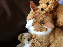 Tabby cat with old teddy bears Stock Images