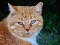TABBY CAT stock photos