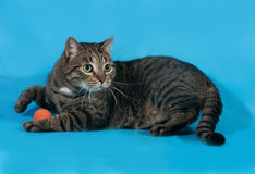 Tabby cat with orange toy ball lies on blue Stock Photo