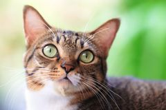 Tabby cat outdoor. Cute tabby cat potrait outdoor Stock Photo