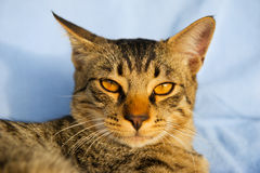 Tabby cat outdoor in sun Royalty Free Stock Photo