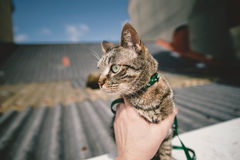 Tabby cat outdoors. Stock Images