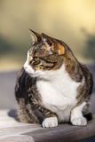 Tabby cat outside in the garden. Cute cat relaxing on a wooden table in the garden Stock Photography